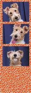 Deze hond in je fotostrip als je bij ons denkt: fotohokje huren